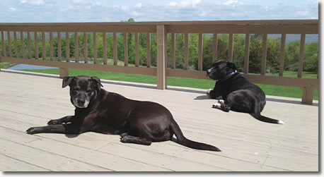 Vineyard dogs Jazz and Boots resting on the Winery deck